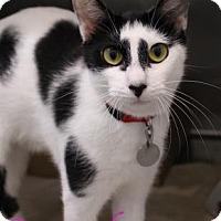 Adopt A Pet :: Scrunchy - Bradenton, FL