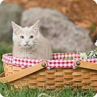 Adopt A Pet :: Rafeal - Hastings, MN