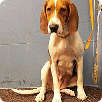 Adopt A Pet :: Henrietta- Foster Home Needed - Wood Dale, IL