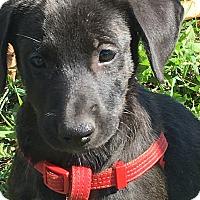 Adopt A Pet :: Terry - Pennigton, NJ