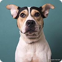 American Bulldog Mix Dog for adoption in Anniston, Alabama - Princess
