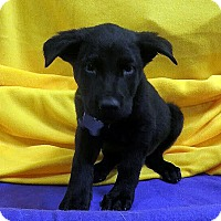 Adopt A Pet :: Boo Black - Detroit, MI