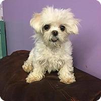 Adopt A Pet :: Lula - Elgin, IL