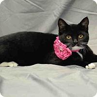 Adopt A Pet :: Oreo - St. Cloud, FL