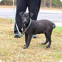 Adopt A Pet :: Wally - Oakdale, LA