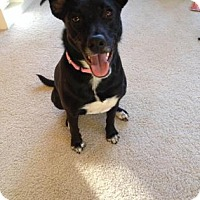 Adopt A Pet :: Lucy Lou - Northfield, MN
