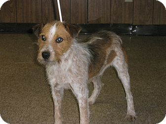 Terrier (Unknown Type, Medium) Mix Dog for adoption in McLoud, Oklahoma - Jasper