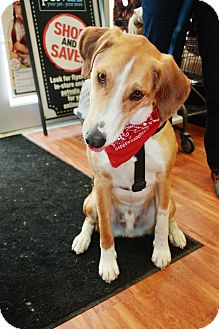 Hound (Unknown Type) Mix Dog for adoption in Douglas, Ontario - Hunter
