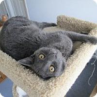 Adopt A Pet :: Tinker - Lebanon, PA