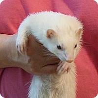 Adopt A Pet :: Eva - Eugene, OR