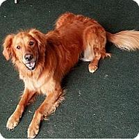 Adopt A Pet :: Lucy - Denver, CO