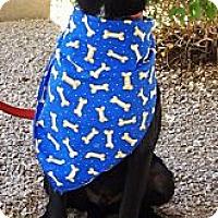 Adopt A Pet :: Eli - Adoption Pending - Phoenix, AZ
