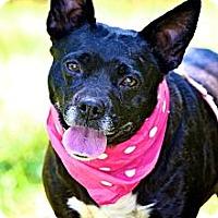 Adopt A Pet :: Sharon - Albany, NY