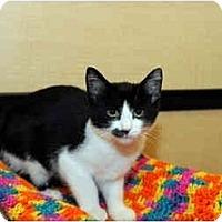 Adopt A Pet :: Penelope - Farmingdale, NY