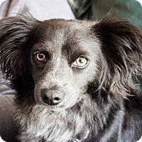 Adopt A Pet :: Felix - Surrey, BC