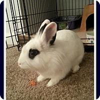 Adopt A Pet :: Archie II - Williston, FL