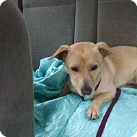 Adopt A Pet :: Carmella - La Crosse, WI