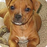 Adopt A Pet :: Ziva - Gainesville, FL