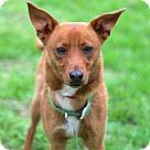 Adopt A Pet :: LITTLE ROMEO
