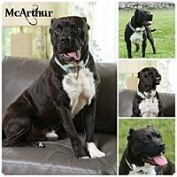 Adopt A Pet :: McArthur - Sioux Falls, SD