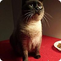 Adopt A Pet :: Allanna - Columbus, OH