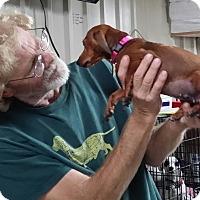 Adopt A Pet :: Rylee - Lubbock, TX
