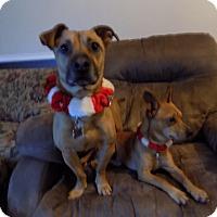 Adopt A Pet :: Cooper & Chico - Cranston, RI