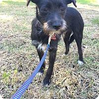 Adopt A Pet :: Jackie Chan - Encino, CA