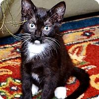 Adopt A Pet :: Piper - Davis, CA