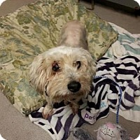 Adopt A Pet :: Snuggle - Austin, TX
