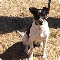 Adopt A Pet :: Branson - Alpharetta, GA
