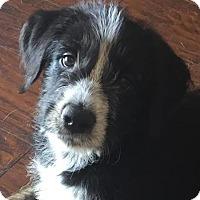 Adopt A Pet :: Cristi - Bradenton, FL