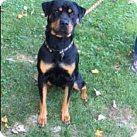 Adopt A Pet :: TANK - Averill Park, NY