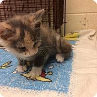 Adopt A Pet :: Judy Garland - Janesville, WI