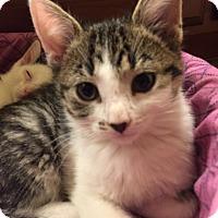 Adopt A Pet :: Addison - Maywood, IL