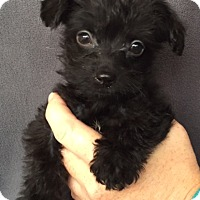 Adopt A Pet :: Grover - Hainesville, IL