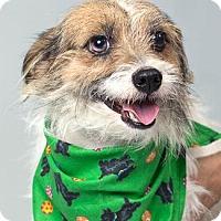 Adopt A Pet :: PONCHO - Pt. Richmond, CA