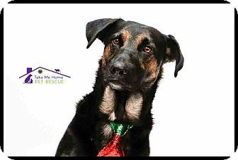 German Shepherd Dog Mix Dog for adoption in Richardson, Texas - Brinkley