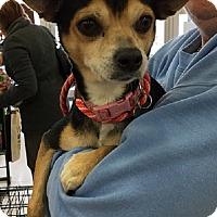 Adopt A Pet :: Jolly - Rockaway, NJ