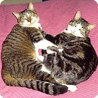 Adopt A Pet :: Limpy and Mackey - Parkton, NC