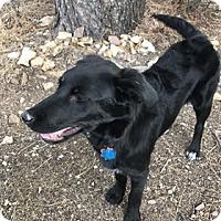 Adopt A Pet :: Tiny - Broomfield, CO
