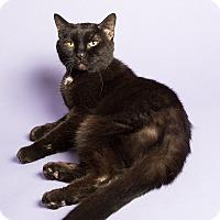 Adopt A Pet :: Nicole - Wheaton, IL