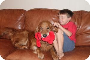 Golden Retriever Dog for adoption in Knoxvillle, Tennessee - Riley