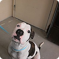 Adopt A Pet :: Petey - Wallaceburg, ON