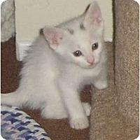 Adopt A Pet :: Spots - Brea, CA