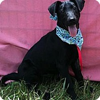 Adopt A Pet :: *Twinkle* - Hancock, MI
