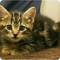 Adopt A Pet :: Rosemary - Secaucus, NJ