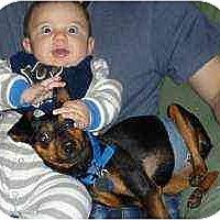 Adopt A Pet :: Henry - Florissant, MO