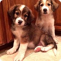 Adopt A Pet :: *Mason - PENDING - Westport, CT