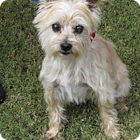 Adopt A Pet :: Gracie - Scottsdale, AZ